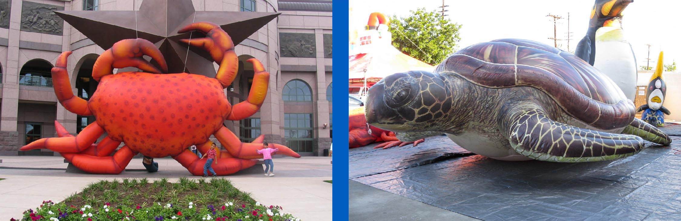 inflatable-crab-and-inflatable-sea-turtle